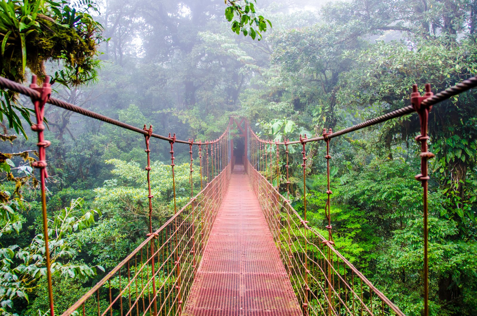 A walk through the majestic Monteverde Cloud Forest